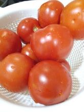 Tomates rojos